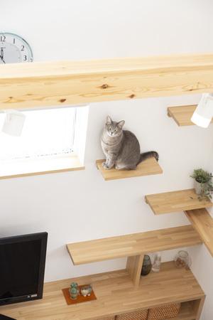 ネコと楽しく暮らすフルリノベーション