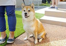 愛犬と暮らしやすく増築・外構リフォーム